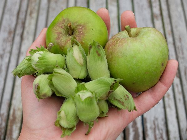 Apples and cobnuts