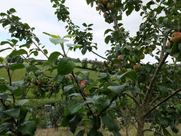 Narberth Community Orchard sml